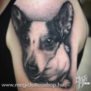 Kutya portré tetoválás Budapesten